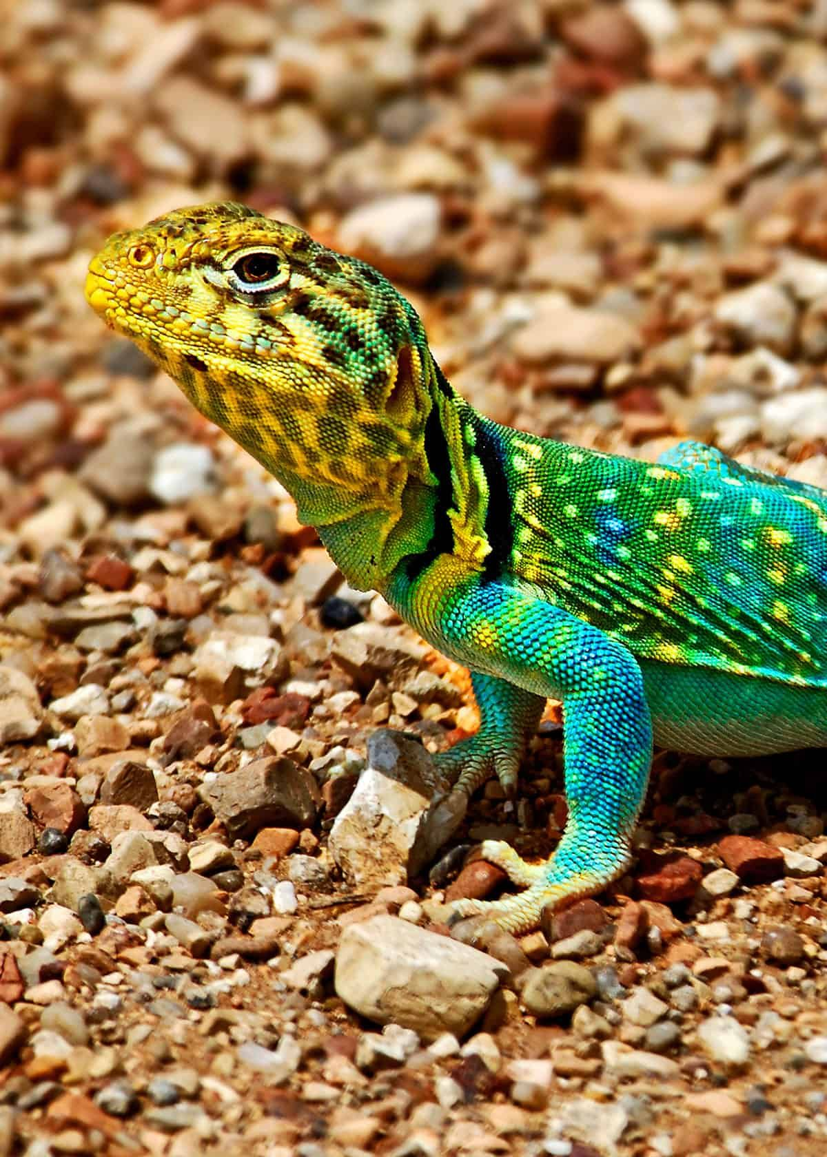 35 Most Colorful Animals In The World Mammals Birds