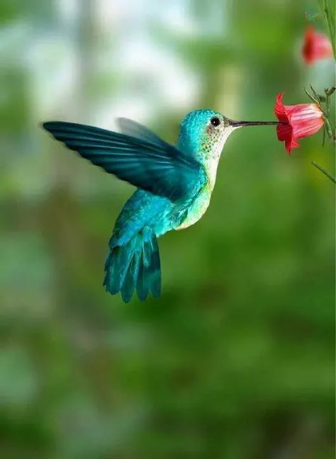 70+ Trendy humming bird art drawing beautiful