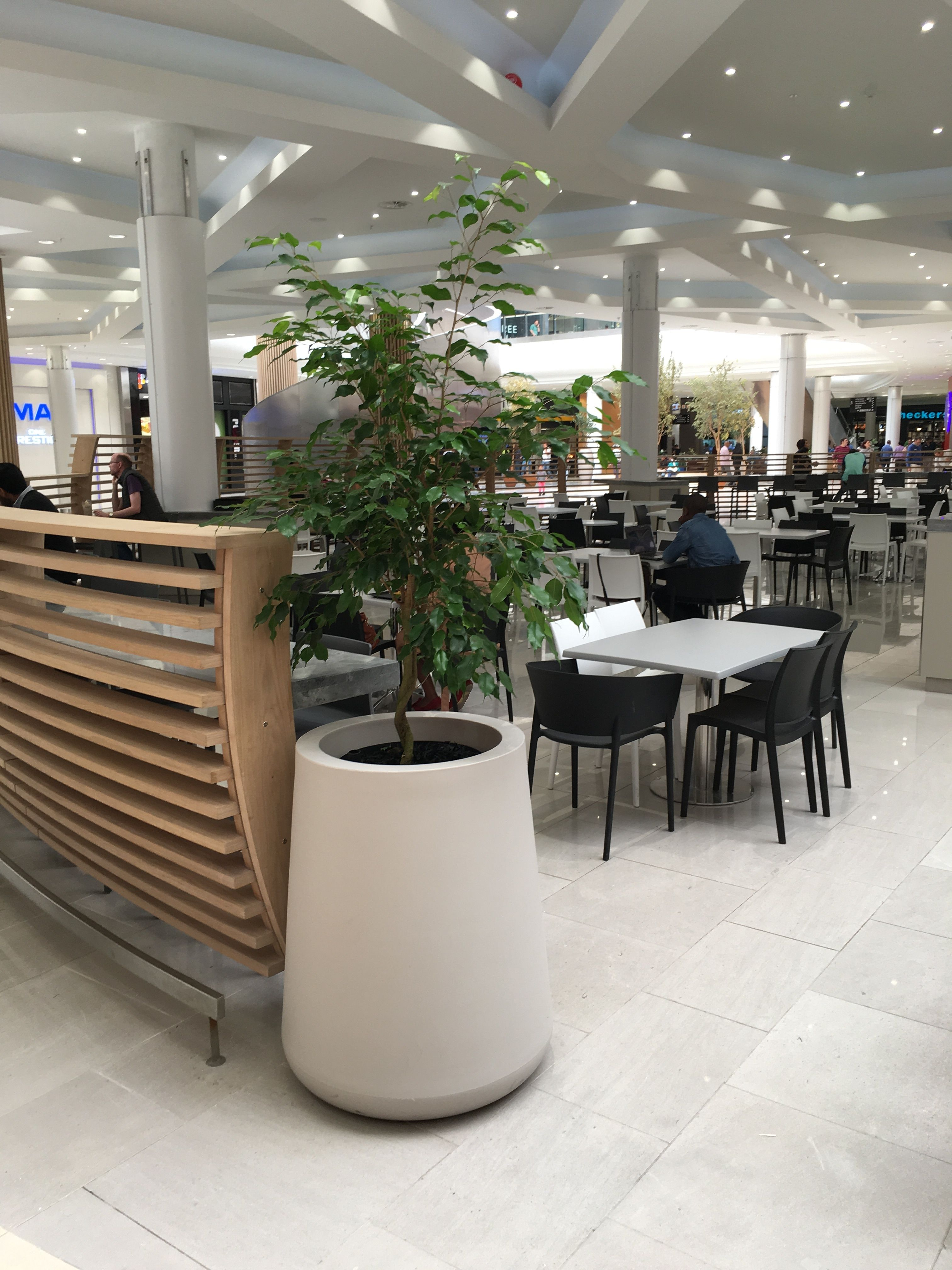 We were proud to be involved with the new Mall of Africa installing plants into pots supplied by the architects.