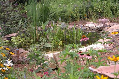 Backyard frog pond good instructions for building one for Backyard pond animals
