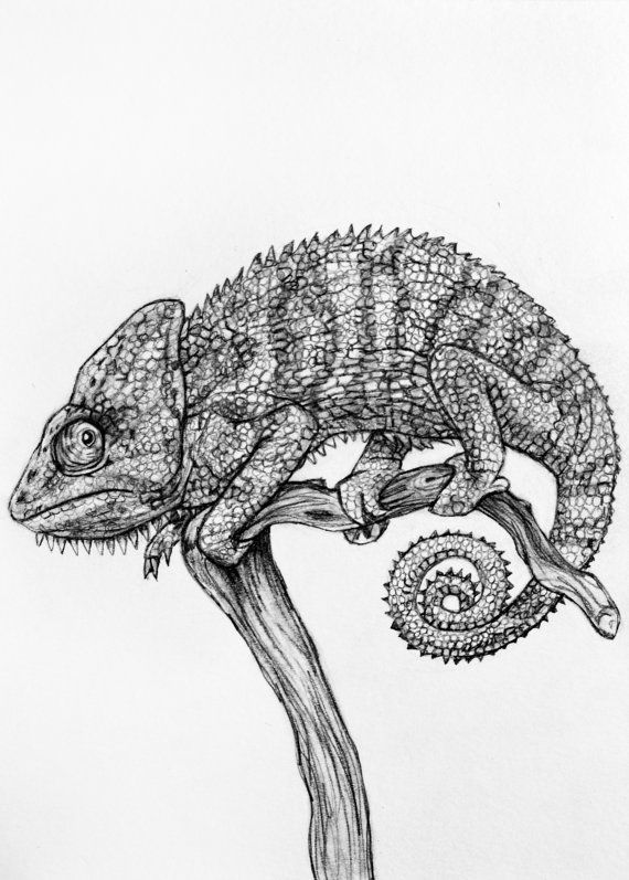 Original Pencil Drawing Chameleon 19 By Rachelledyer On Etsy Drawings Pencil Drawings Drawings Colored Pencil Artwork