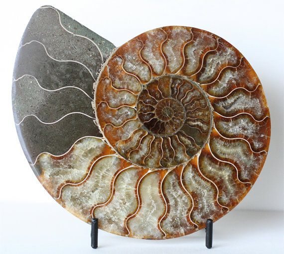 Huge Ammonite Fossil Large Nautilus Shell Display Stone Mens Gift Specimen With Metal Stand Bohemian Decor Beach