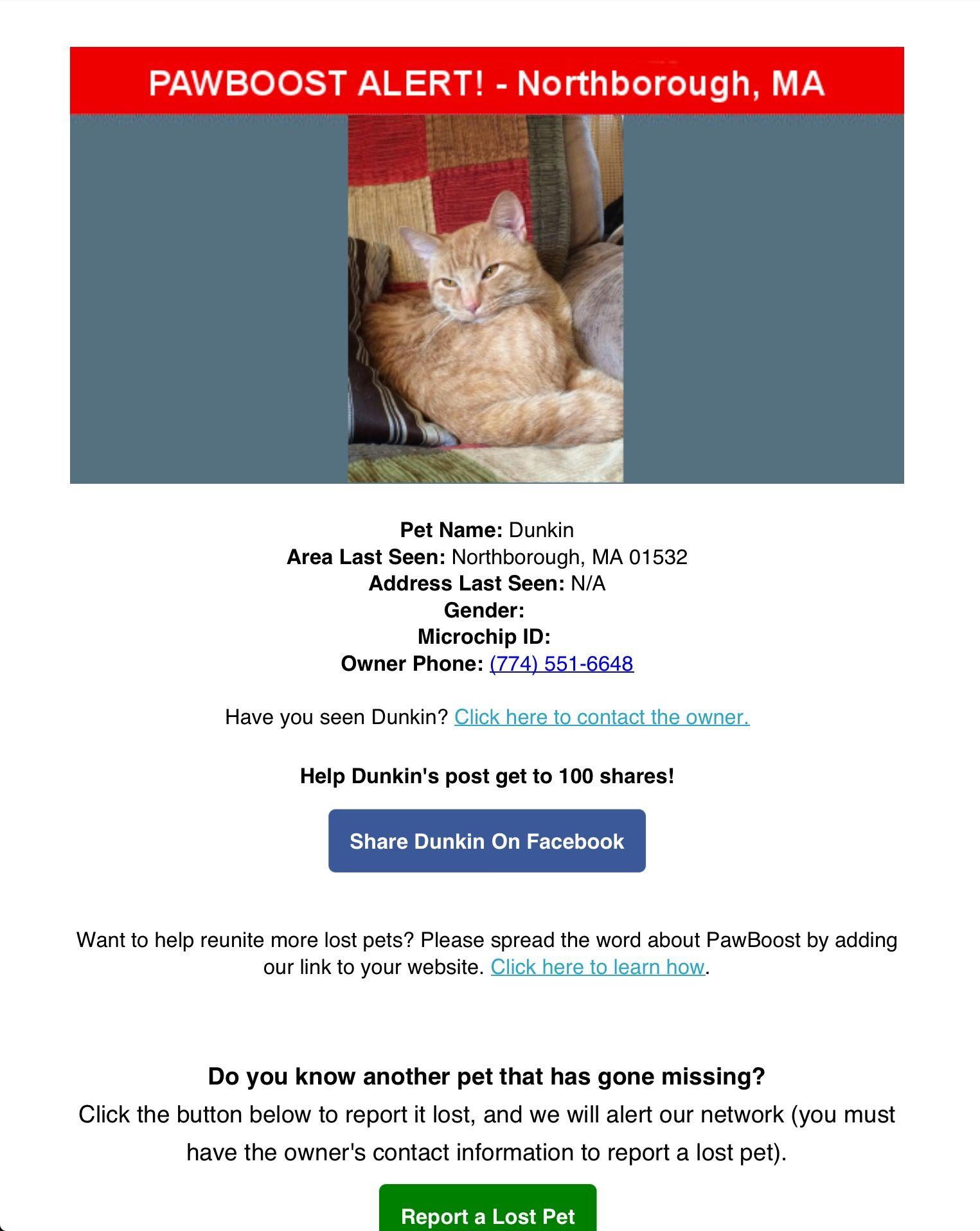 Lost Cat Named Dunkin Northborough Ma Pet Names Lost Cat Cat