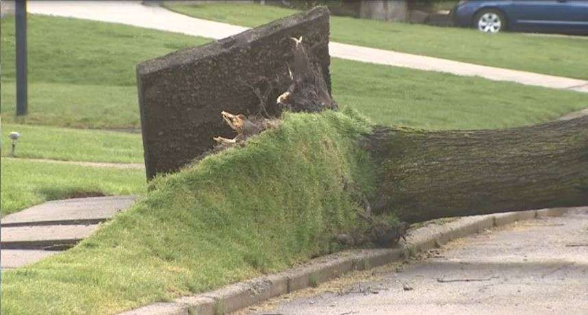 Cleanup underway after strong storm rolls through Mass
