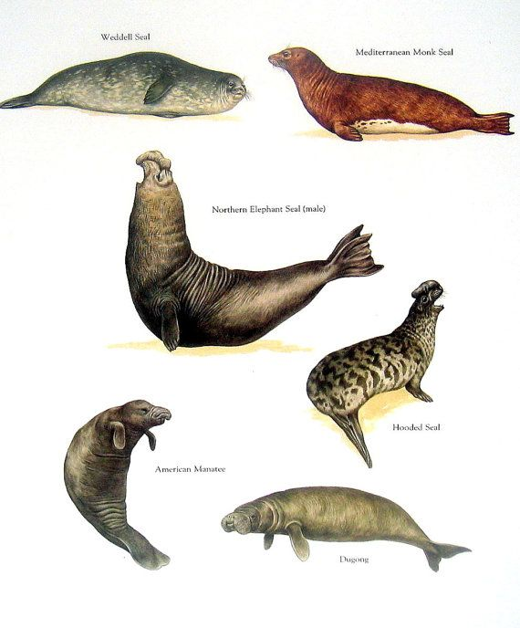 Sea Lion Press