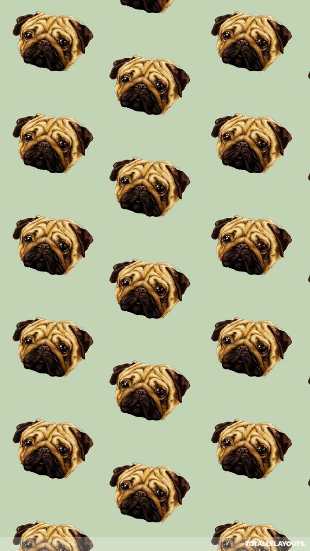 Cute Pugs Wallpaper wallpaper hd