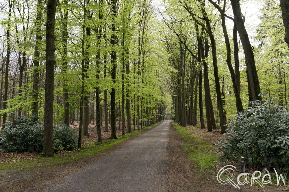 De Boekhorst in het groen ; De Boekhorst in het groen | foto 1 http://blog.qdraw.nl/gelderland/de-boekhorst-in-het-groen/