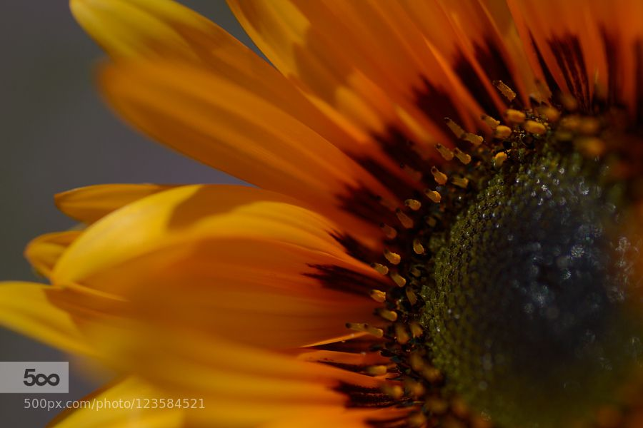 yellow by Tets #nature