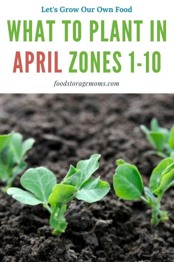 Pin On Gardening Vegetables