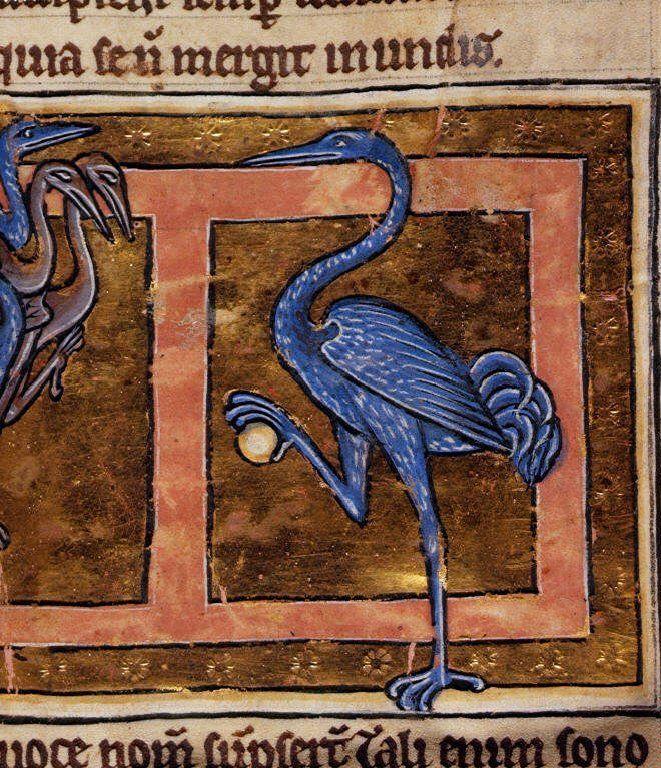 Blue heron with egg. Medieval illustration.