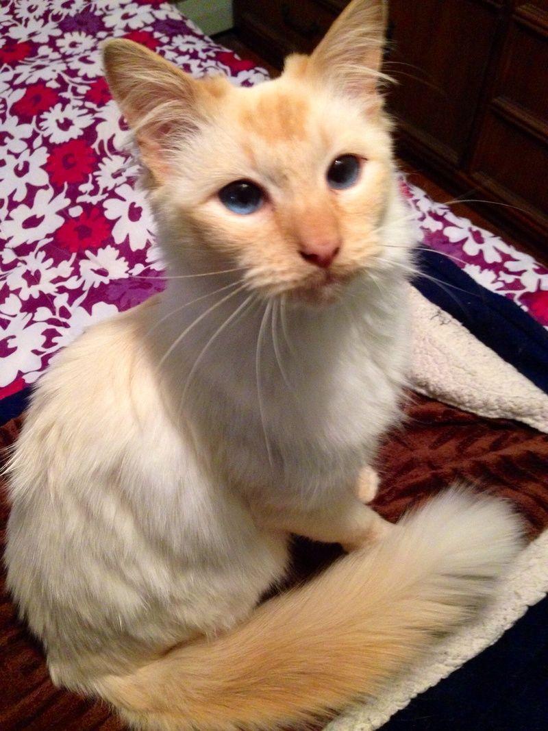 Adopt Misty On Cat Adoption Cat Photo Cats