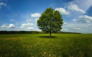 Wild flower, tree, field, clouds, nature