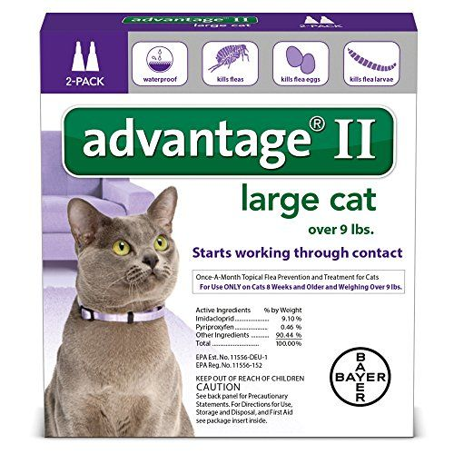 Natural Care For Keeping Dogs Cats Healthy Cat Fleas Large Cats Flea Prevention For Cats