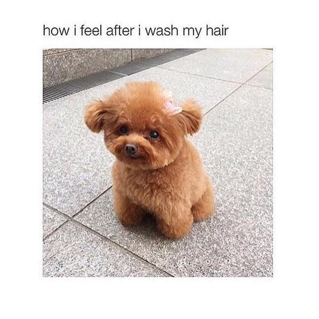Fluffy af Comment your pets name Hairstyles u Makeup Pinterest