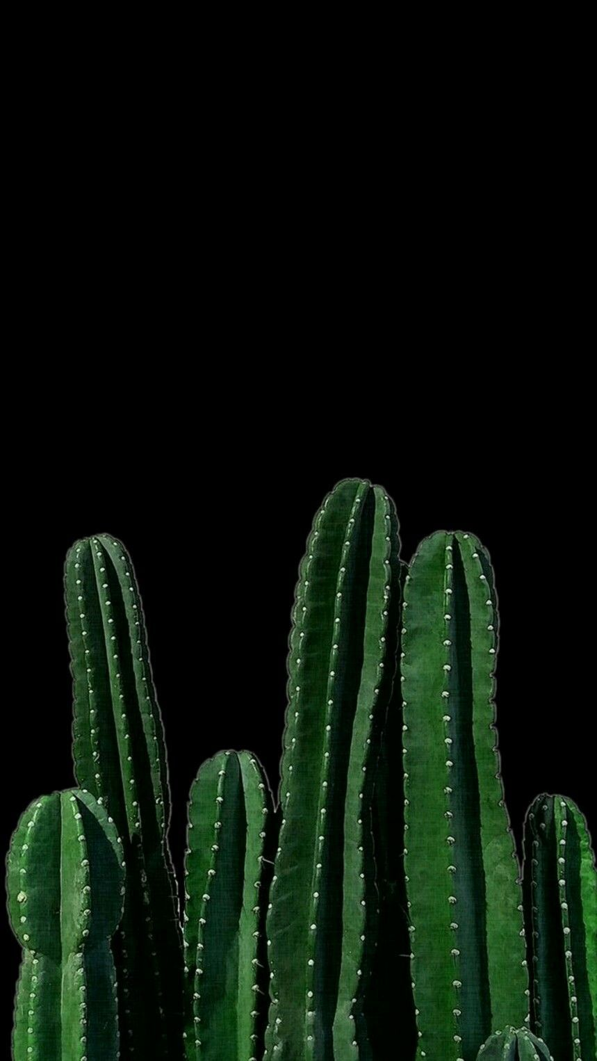 Cactus green san pedro cactus saguaro plant terrestrial plant artwork in 2019 iphone - San pedro wallpaper ...