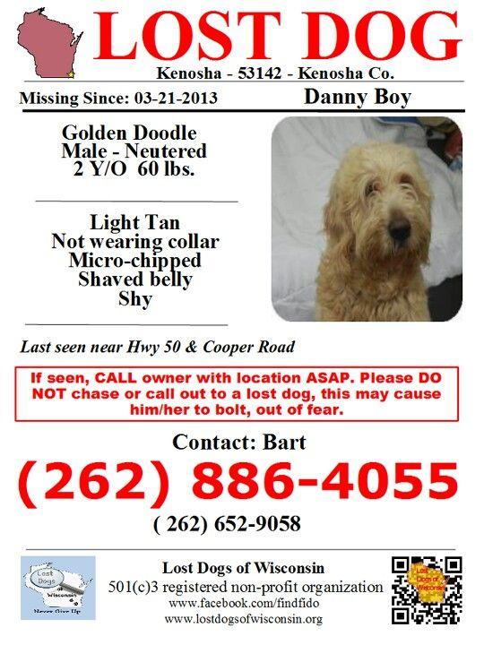 Danny Boy Losing A Dog Losing A Pet Dogs