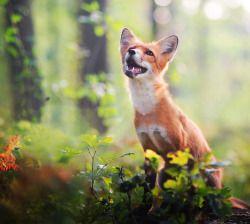 Foxy Smile by Iza Lyson