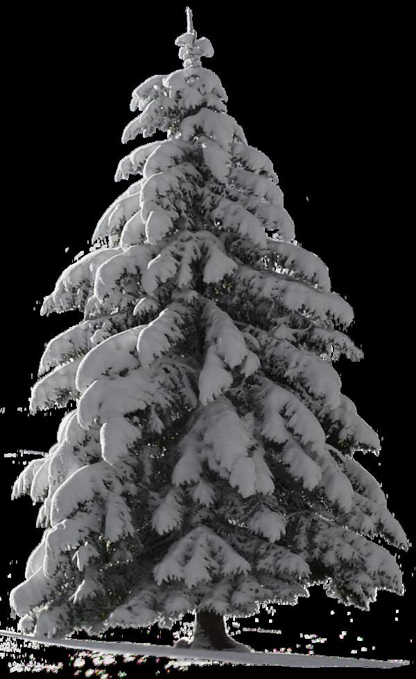 Christmas Tree Snow For My Watcher Stock Snow Tree Icon Christmas Tree