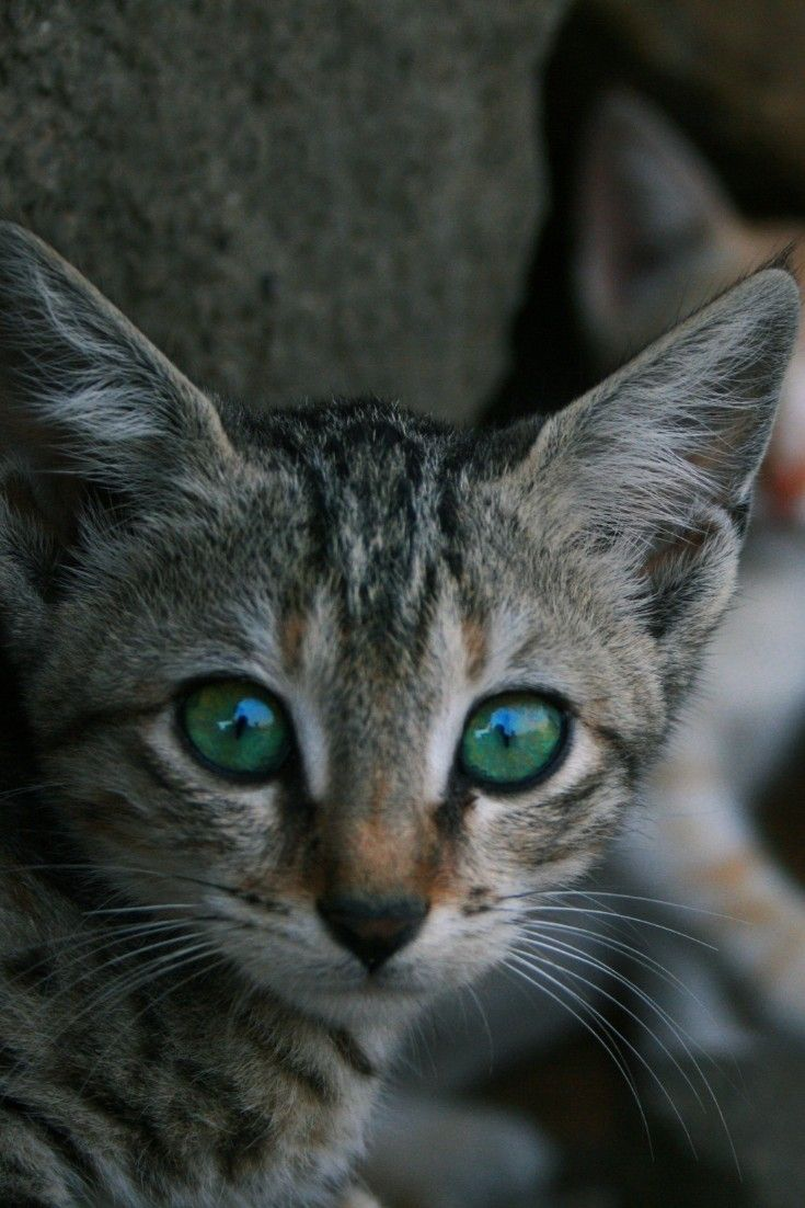Top 20 Cutest Dog Breeds around the World Cat breeds