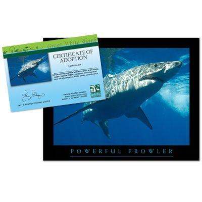 Adopt A Great White Shark | Adopt A Great White Shark Shark Fintastical Pinterest Shark