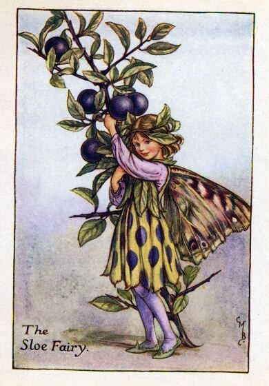 Sloe Flower Fairy Vintage Print,  Cicely Mary Barker..printed c.1927 – The Sloe Flower Fairy is one of Cicely Barkers Autumn Flower Fairies.