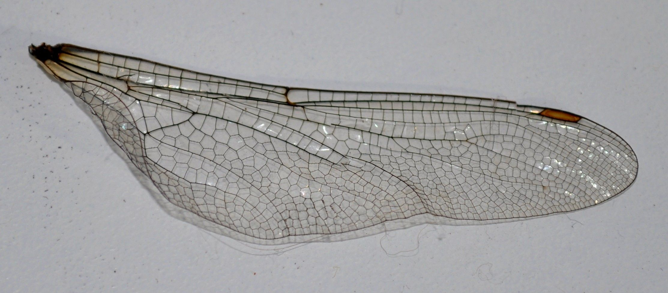 Dragonfly Project Dragonfly Wing Stock 3 By Mirandarose Stock On Deviantart