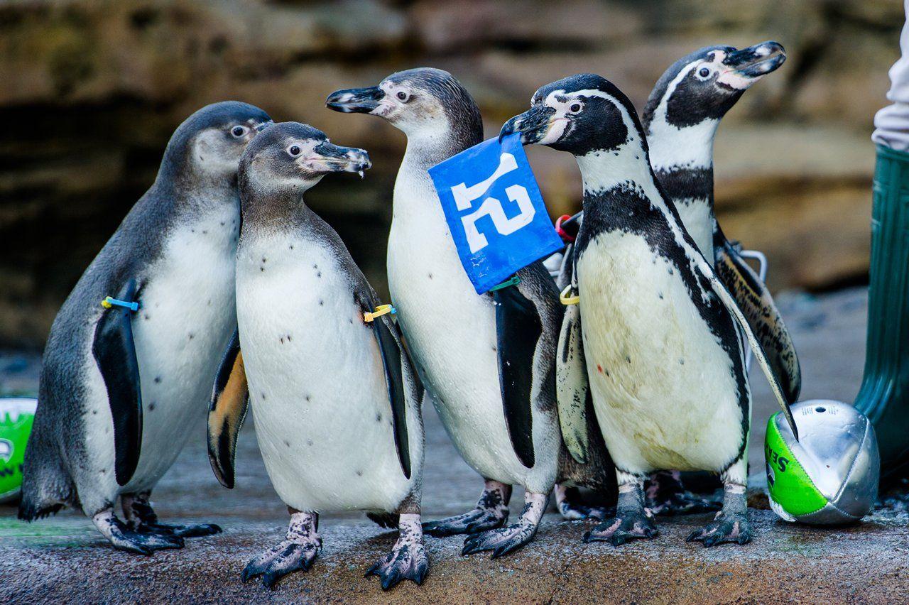 Humboldt Penguin Exhibit Woodland Park Zoo Seattle Usa By Studio Hanson Roberts Zoo Architecture Woodland Park Zoo Zoo