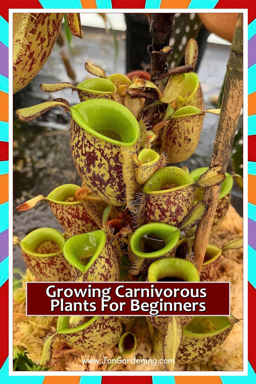 45+ Carnivorus ideas