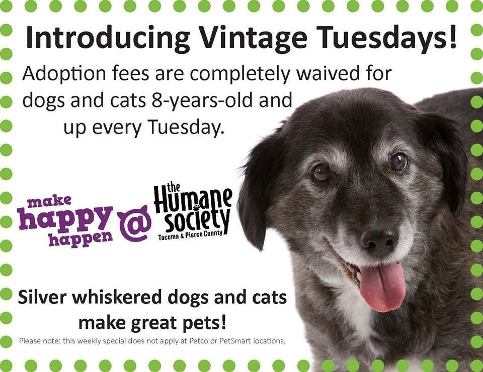 Plan Ahead 11 Ways to Promote Senior Pets Dog adoption