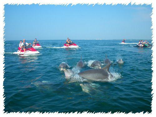 Myrtle Beach Jet Ski 2 Hour Dolphin