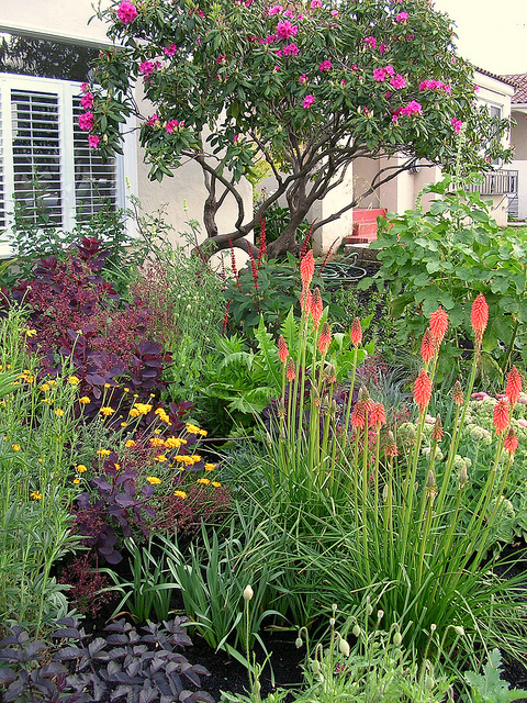 Beautiful, colorful, drought tolerant plants.