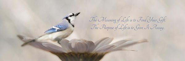 The Meaning Of Life By Lori Deiter You Can See More Of Her Work At