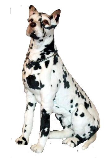Longfellow Great Dane Harlequin Great Dane Puppy Great Dane Funny Great Dane