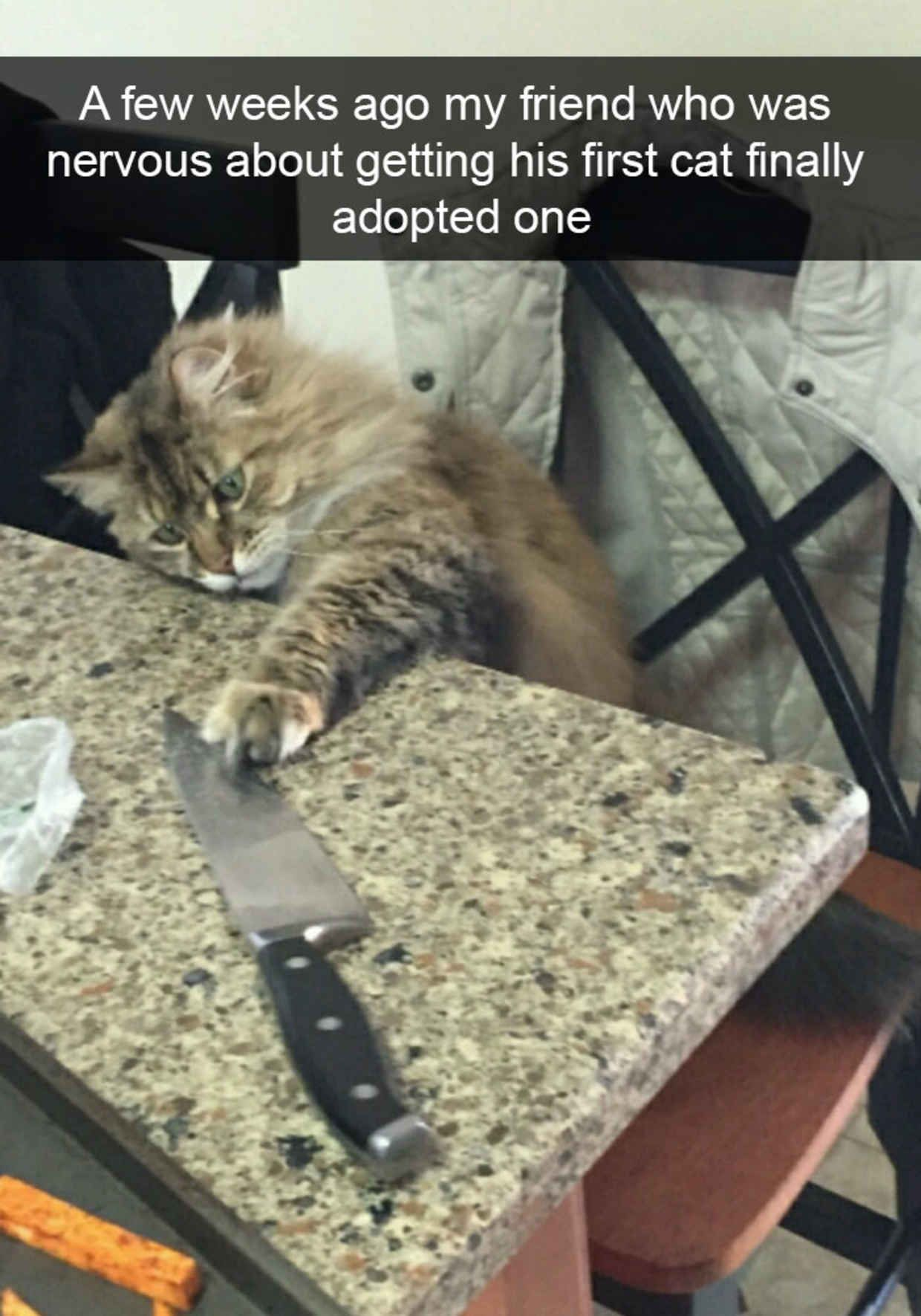 The 28 Funniest Cat Snapchats Of All Time Funny Cat Memes Funny Animals Cute Animal Videos