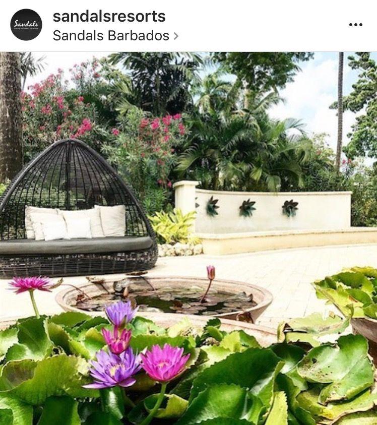 Backyard, Condo, Barbados