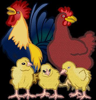 Dyr, Chick, Kylling, Pik, Gård