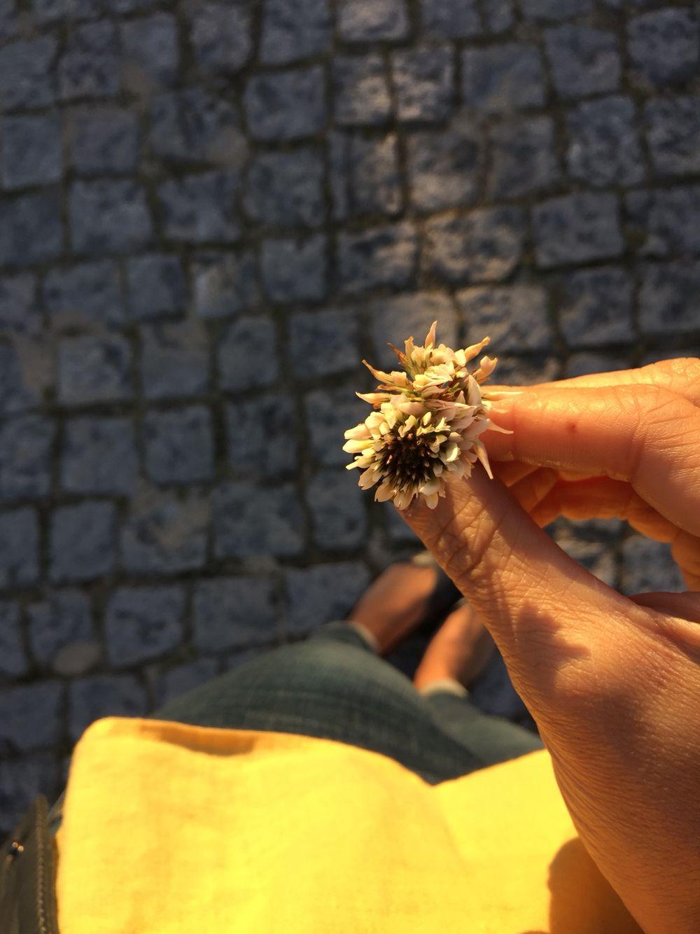 une petite fleur pour vous Constanza!