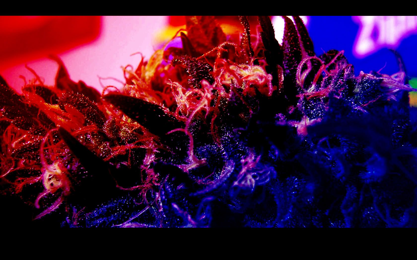 Iphone 5 Hd Wallpapers 1080p: Trippy Smoke Wallpapers - HD