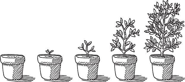Flower Growing Clipart 72777 | DFILES | Plant sketches ...