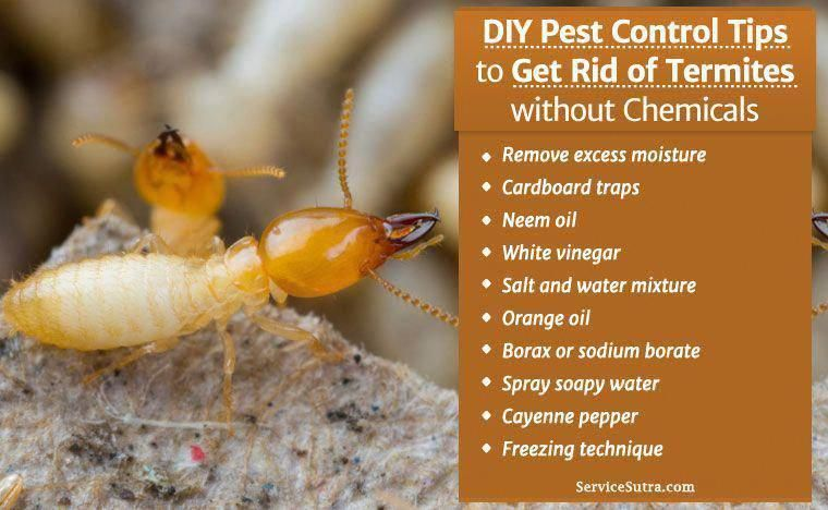 Tired Of Termites And Wondering How To Get Rid Of Termites Naturally Here Re The Best Do It Yourself Pest Control Tips Diy Pest Control Pest Control Termites