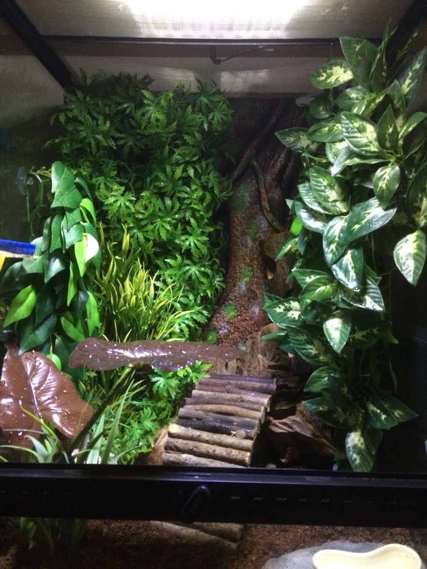 Crested Gecko Set Up Find The Gecko Tera Crested