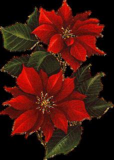 Gifs Flores De Pascua Para Decorar El Blog Pintura En Tela Navidad Pinturas De Navidad Pintura En Tela Navidena