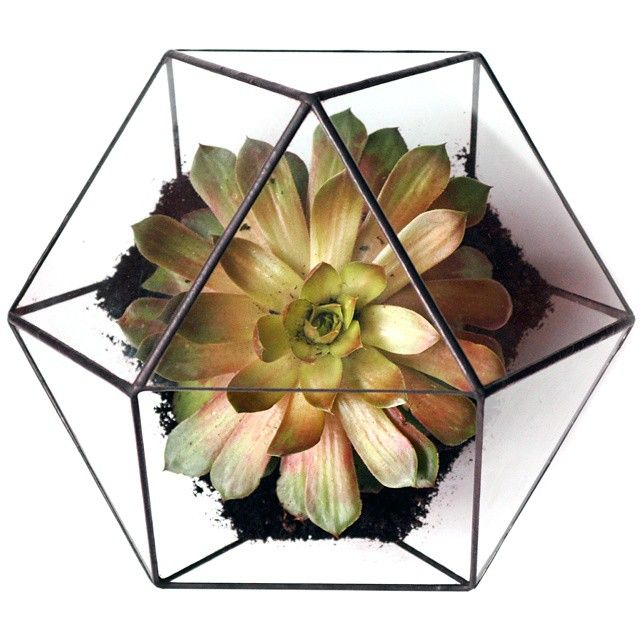 Top View Of Our New Cuboctahedron Terrarium Now On Etsy