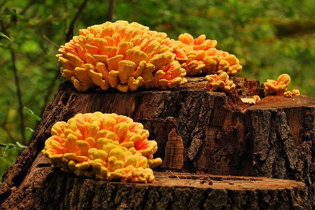 fungus bouquet