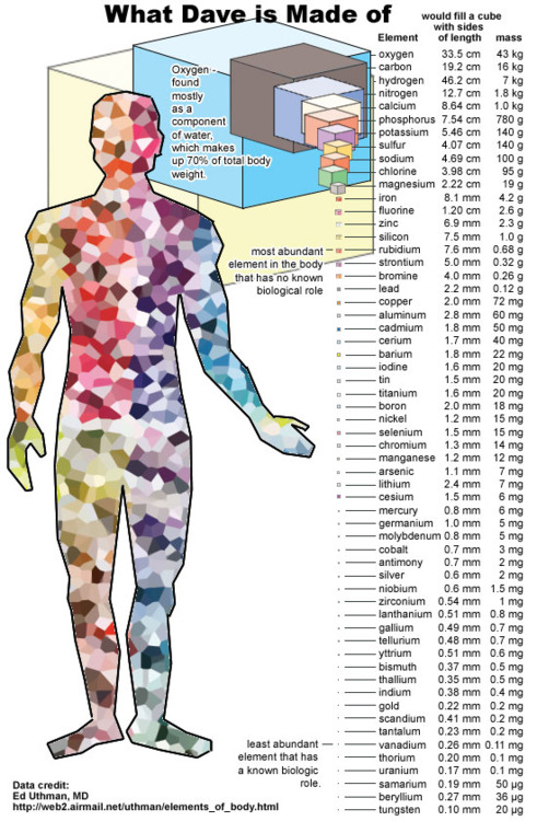 Via scinerds our bodies are comprised of a vast array of elements periodic table urtaz Image collections