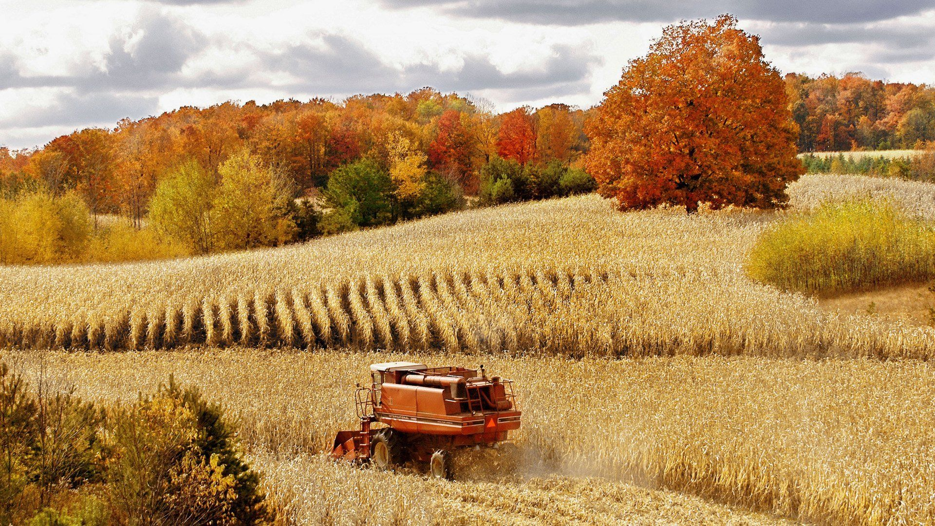Download Wallpaper wheat, field, autumn, forest, nature