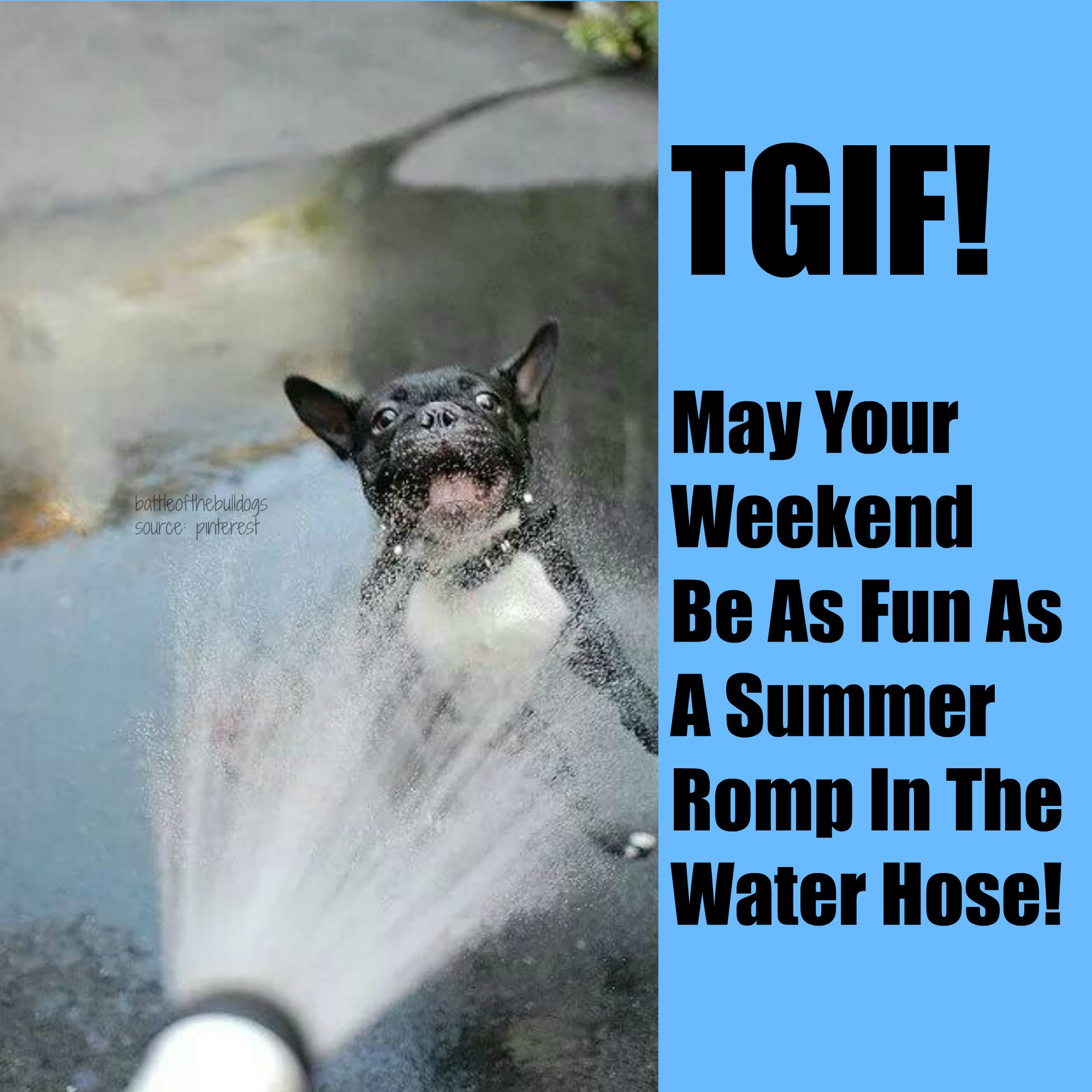 May Your Weekend Be As Fun As A Summer Romp In The Water Hose Water Hose Romp Fun