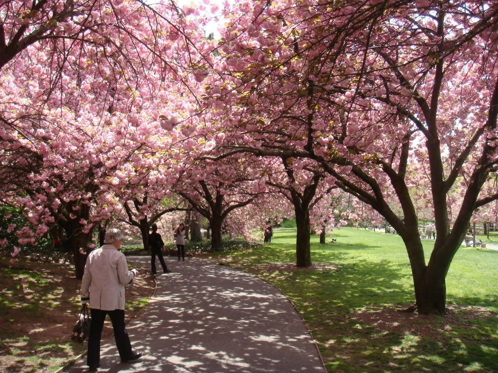Victoria Bc Blossoms