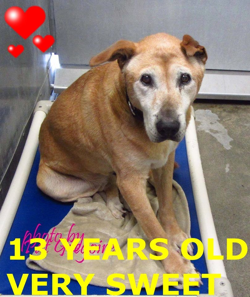 A1303219 My name is Irrie. I am a sweet 13 yr old spayed