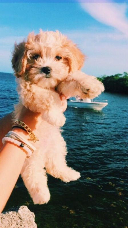 VSCO Create, discover, and connect Cute puppies, Cute